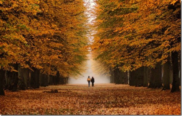 Lindas imagens de folhas do outono (6)