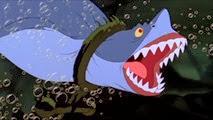 12 le requin