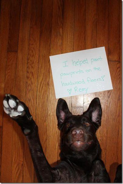 dog-shaming-bad-6