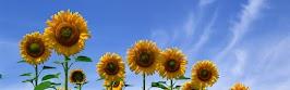flower panoram_nebesnoe.info_03.jpg