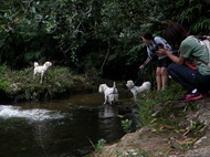 Dogs Trekking 4 (150)
