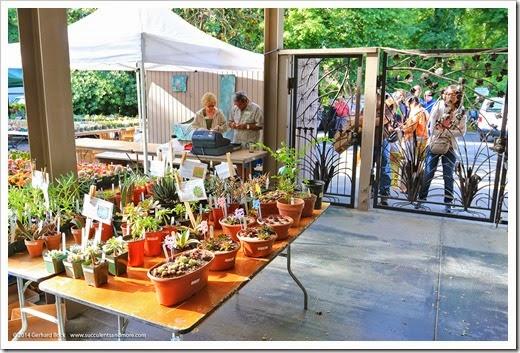 Succulents And More Sacramento Cactus Succulent Society
