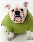 Sweaters Needed for Shelter Animals