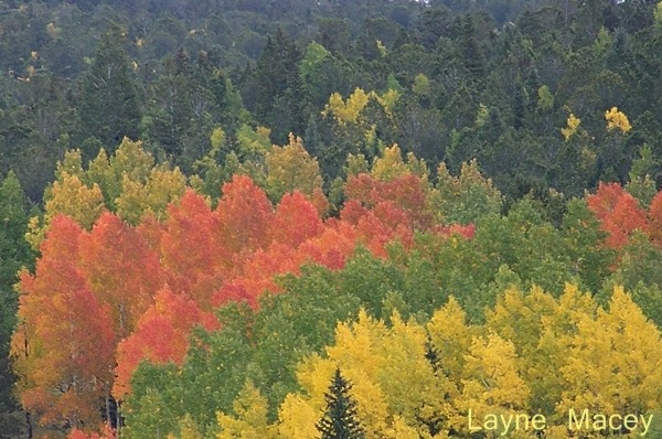 Colorado Fall Colors[1]