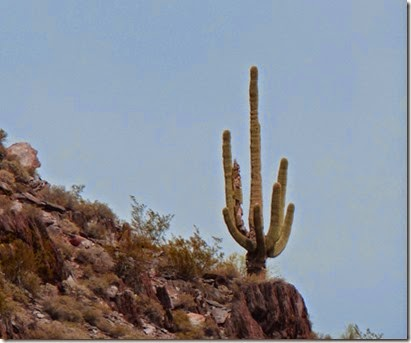 Cave Creek Regional Park Saguaro