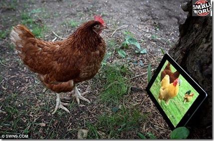 ipad-galinha