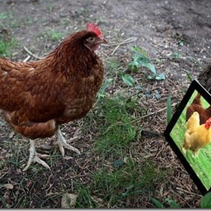 iPad faz galinha botar ovo novamente