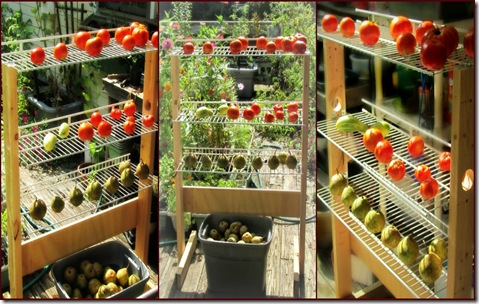 Ripening shelf collage