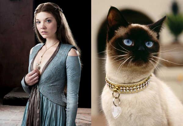 E se os personagens de Game of Thrones fossem gatos 1