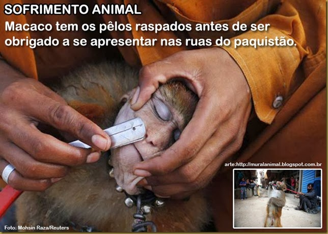 sofrimento-animal