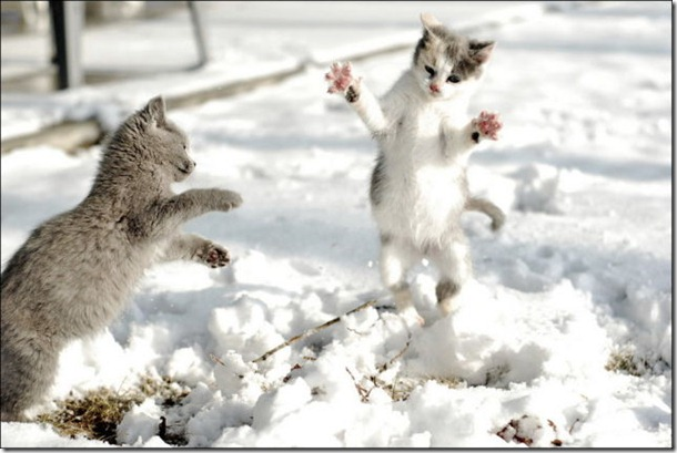 cats-play-snow-4