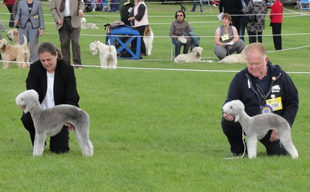 BEST OF BREED : 7589 WALTERS, Miss D B U & MITCHELL Mr B S M Ch Rathsrigg Millrace