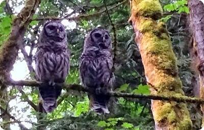 owl5_thumb
