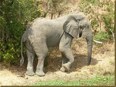 Ziwa, Murchison Falls trip 322