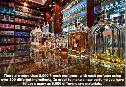 10_interesting_facts_about_smelling_640_08