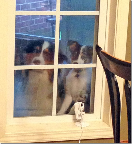 kitchen window dogs