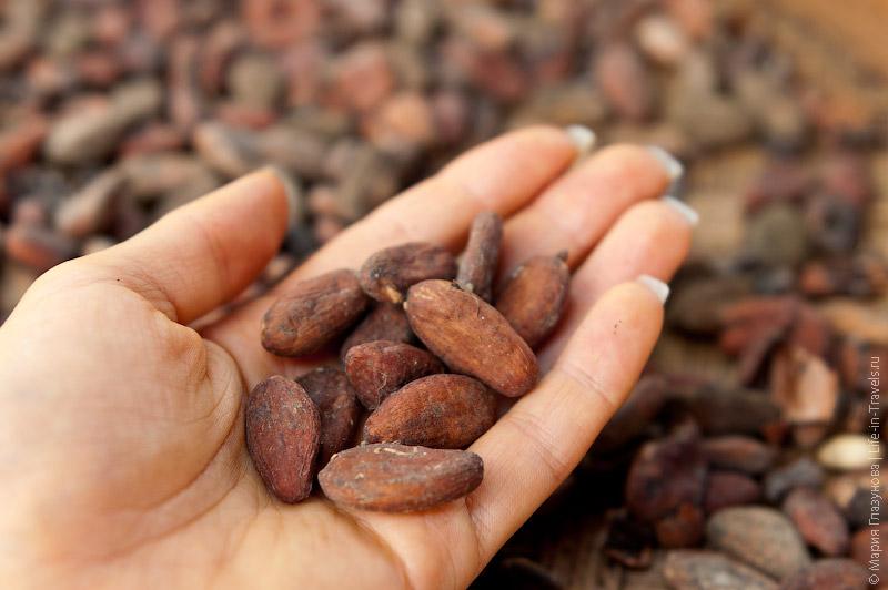 Высушеные какао-бобы