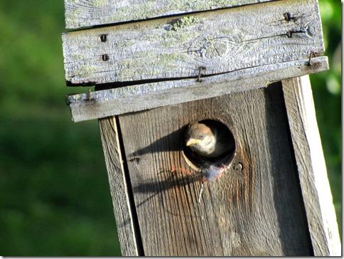 Birdmotel05-13-13c