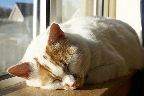 Cats Will Sleep Anywhere 22