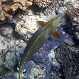 Colorful Fish Swimming in the Water - Noumea, New Caledonia