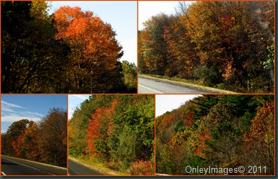 NH foliage collage