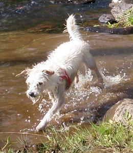 Dogs Trekking 4 (63)