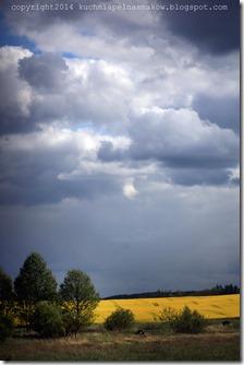 rzepakowe pola (1)