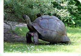 MonaRisk-SeychellesTurtle