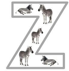 Zz zebra