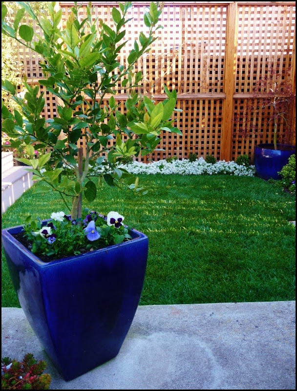 Backyard plantings 005 (607x800)