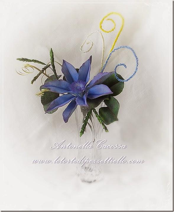 Clematis blu