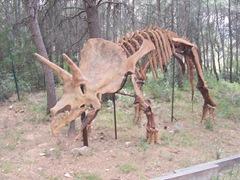 2008.09.10-015 squelette de triceratops
