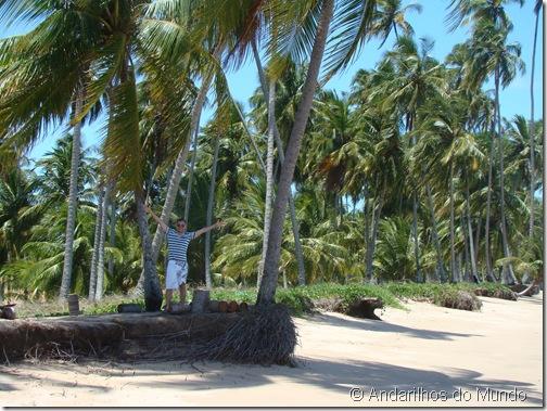 Praia do Patacho Alagoas Brasil Rota Ecológica Coqueiros