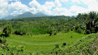 Rizière dans la région de Baturiti