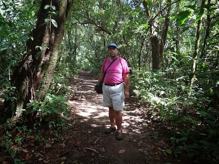 29. Tortuguero jungle.JPG