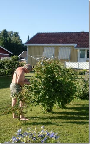 Juli 2013 trädgården 010