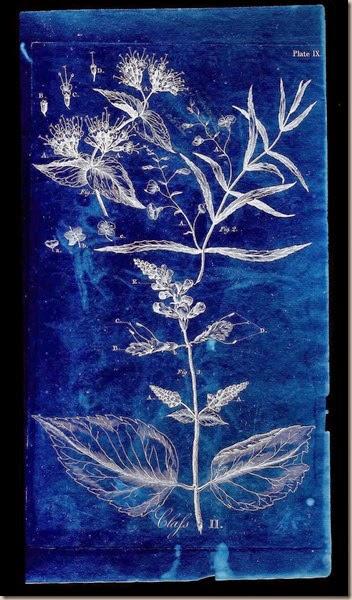 Botanical scan (7x)