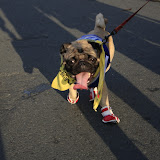 Pet Express Doggie Run 2012 Philippines. Jpg (161).JPG