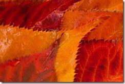 Autumns_Palette-Dru_Stefan_Stone