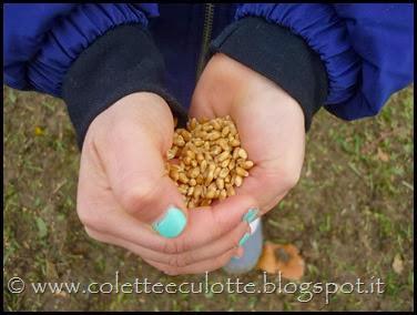 I bambini delle classi 1° della Scuola Primaria di Padulle piantano il grano! (14)