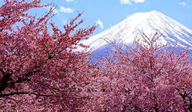 top-10-spring-festivals-2014-including-cherry-blossom-japan-and-holi-in-india-hanami