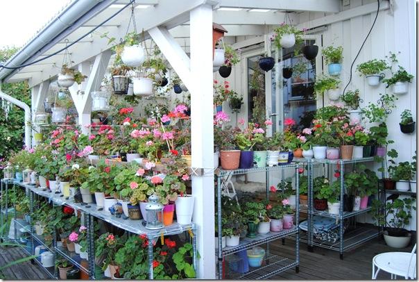 Botanisk hage og hagen i juni -12 040