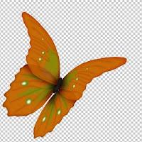 Pretty%2520Butterfly.jpg