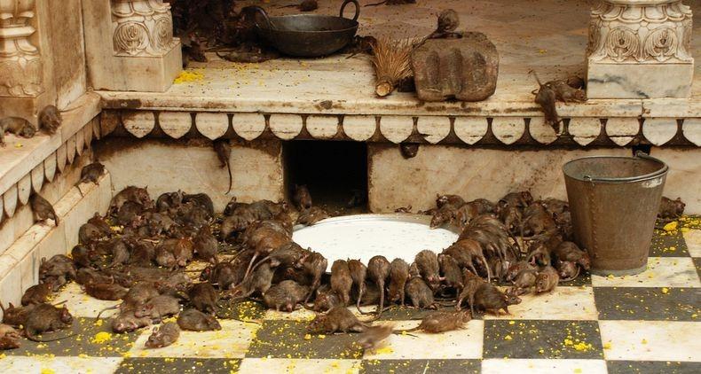 karni-mata-temple-5