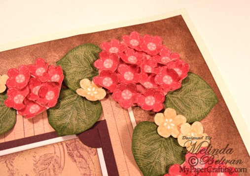 hydrangea close up2-500