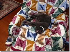 KC on quilt
