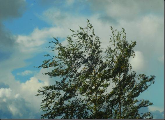 tuuli märkä ikkuna 004