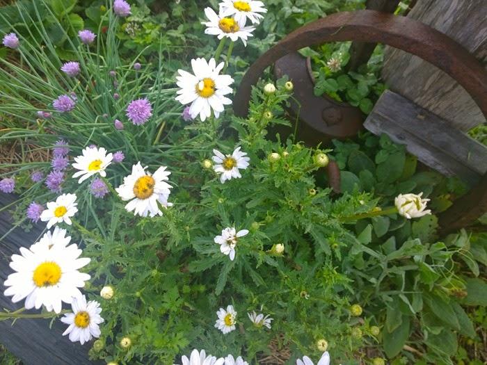 my garden oct 2014 (16)