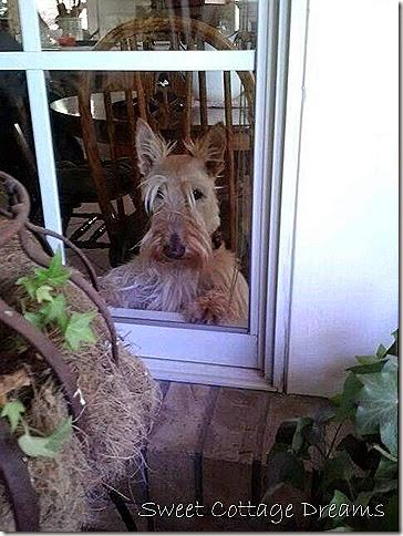 Fee at Window
