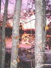 11.2011 Maine Raymond sunset between birch trees